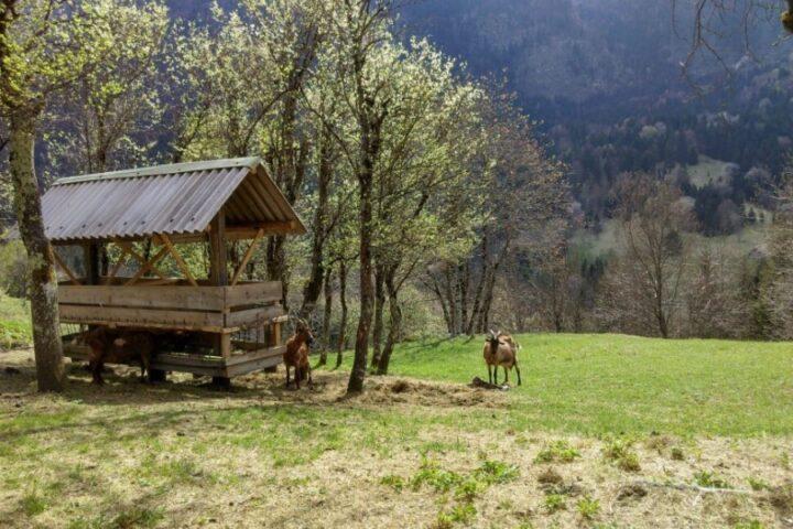 Kozjerejska kmetija Flutač