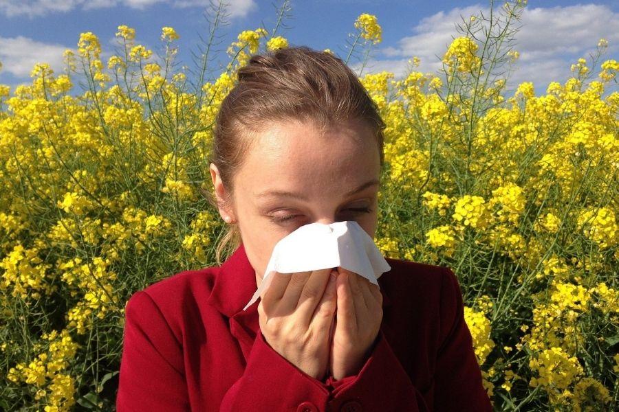 Takoj po kratkotrajni plohi se lahko zgodi, da je v zraku še več cvetnega praha kot pred ploho, kar povzroči še večje alergijske reakcije. Vir slike: Pixabay.