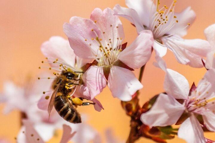 Od čebel je odvisna vsaka tretja žlica hrane na svetu