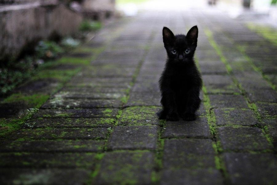 Zakon gre tudi v smeri uvajanja odgovornega lastništva mačk z namenom zmanjševanja števila zapuščenih mačk in sicer na način, da omogoča prostovoljno označevanje mačk. Vir slike: Pixabay.