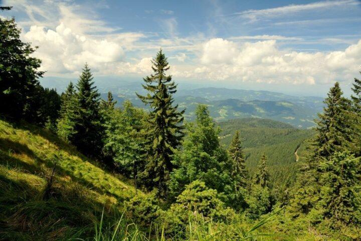 Teden gozdov: načrtovanje, učne poti in zveri