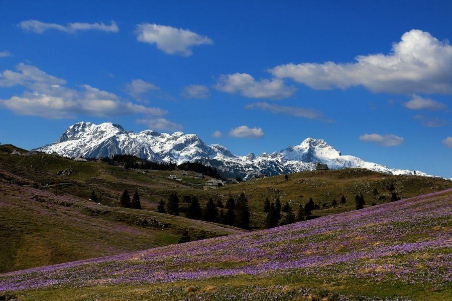 30 vrhov za 30 let: Velika planina je ena najbolj znanih in priljubljenih pohodniško-izletniških točk v Sloveniji, pastirji pa so jo naselili že v srednjem veku. Vir slike: Pixabay.