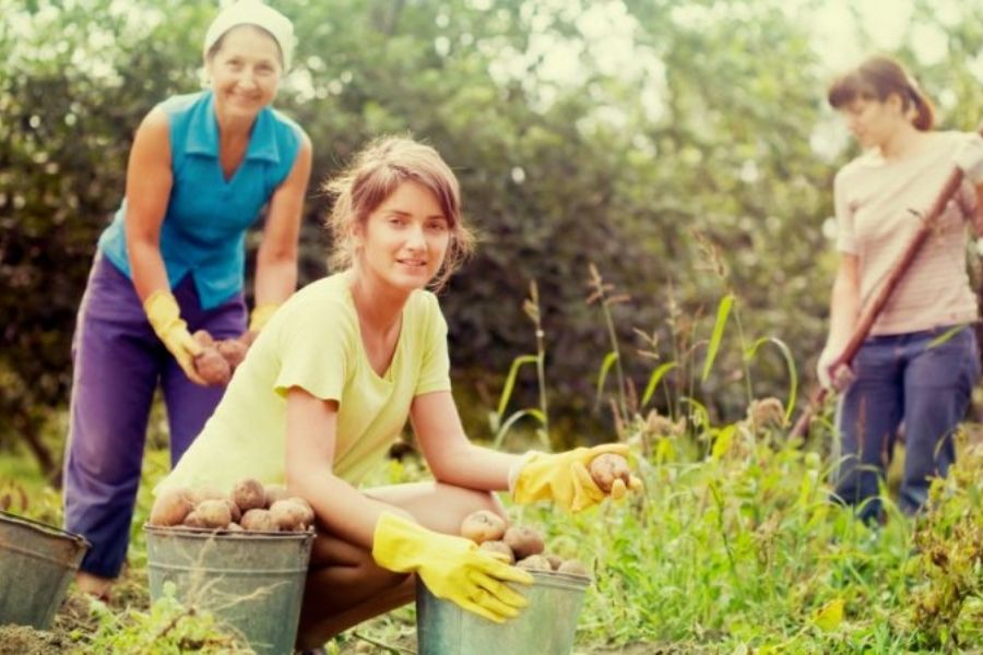 Ženske imajo ključno gospodarsko in družbeno vlogo, kar se še posebej kaže pri projektih v turizmu, obrtništvu ter na področju lokalne kulture ali dediščine, kar prispeva k dinamičnosti podeželja. Vir slike: Shutterstock.