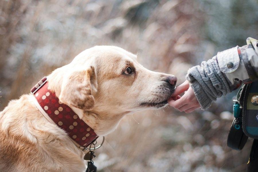 Zakon o zaščiti živali: prepoved ovratnic ob privezu psov je lažna novica