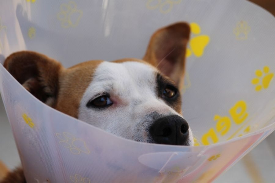 Marsikdo se je v primeru hujše bolezni ali poškodbe domače živali primoran odločiti za usmrtitev, saj denarja za drage posege nima. Zavarovanje bi to lahko rešilo. Vir slike: Pixabay.