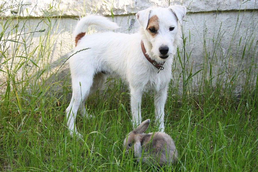 Slovenska ljudska pravljica: Zakaj teče pes za zajcem